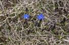 BRI Fleurs avril 15
