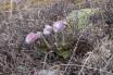 BRI Fleurs Granon 4
