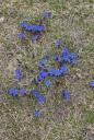 BRI Fleurs Granon 5