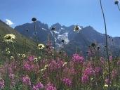 La Meije depuis le Jardin botanique alpin du Lautaret
